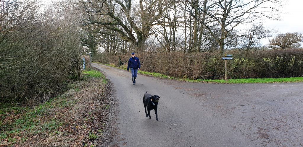 Walking improves health. Kirsty and her black dog walking along the farm lane.