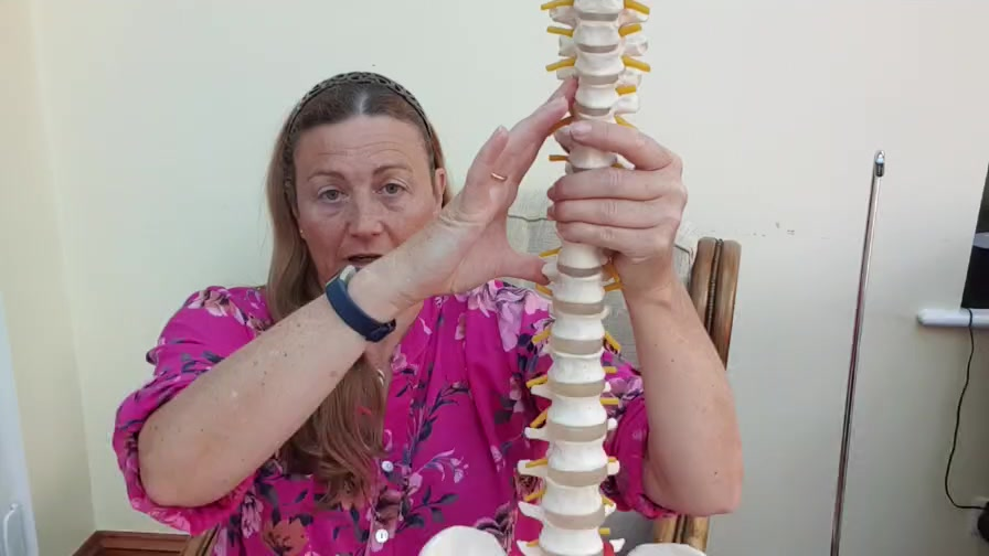 A model of the spine